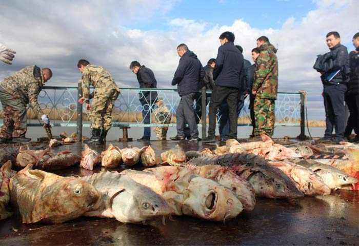 Задержание браконьеров