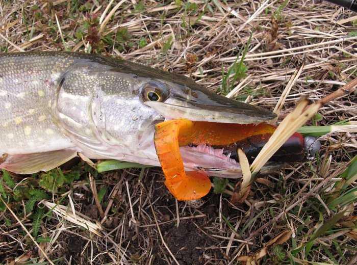 Спиннинг Dodger DGS-862MH отзыв рыболова