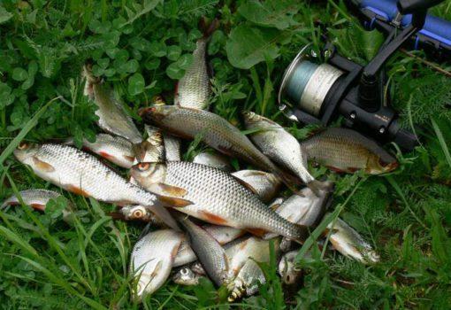 Сохранить рыбу на рыбалке летом