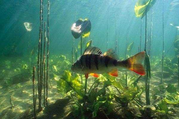 атмосферное давление на клев рыбы