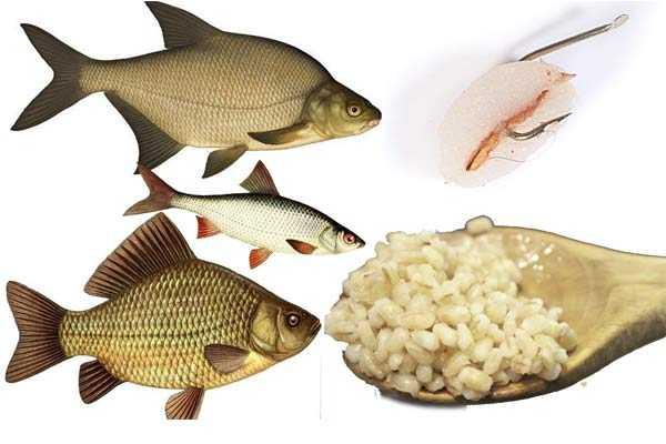 перловка для белой рыбы
