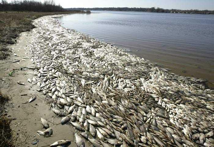Экологическая катастрофа в Астрахани на День рыбака!