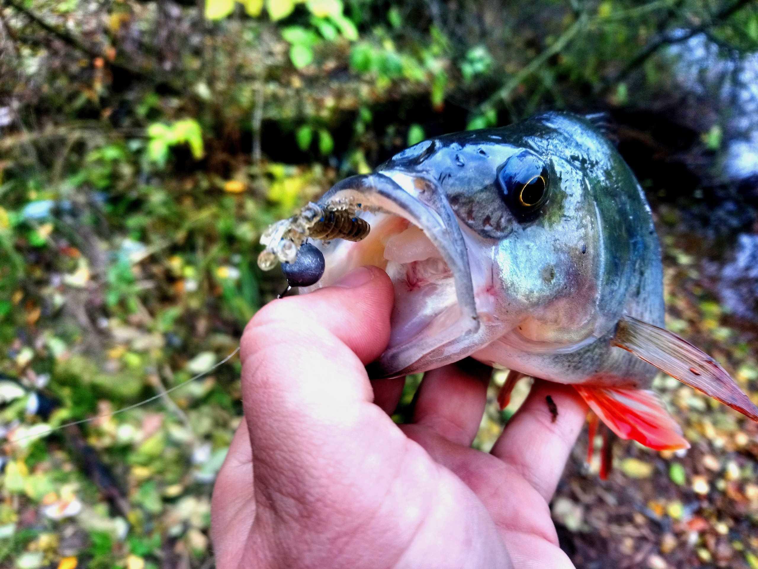 Отчет рыболова 30.10.18