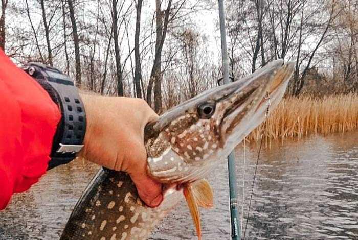 Отчет рыболова 29.10.18
