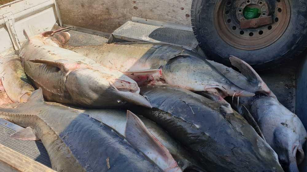 Сахалинские браконьеры задержаны с рыбой ценных пород 9 июня 2019