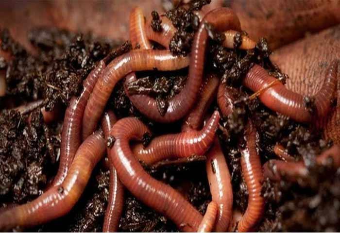 Как сохранить червей в домашних условиях